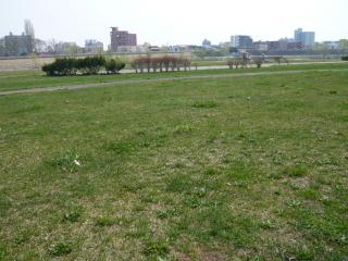 2008_0426kase0011.jpg