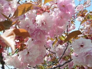 2008_0518vb0020b.jpg