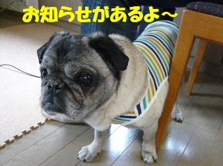 2008_0525rock0014b.jpg