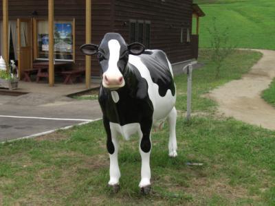 八雲町の牧場