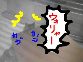 snap_gurikun306_200991135320.jpg