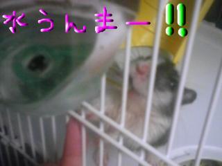snap_gurikun306_2009940720.jpg