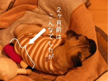 nobi2.jpg