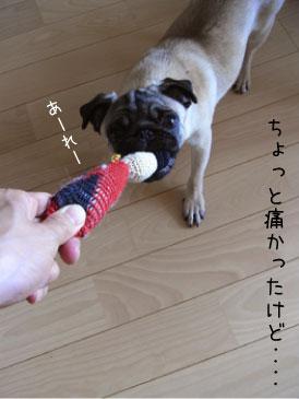 nobi4.jpg