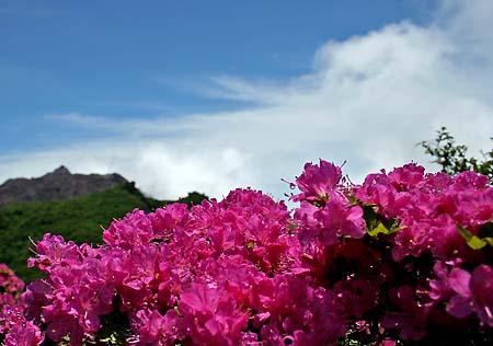 平成新山とミヤマキリシマ
