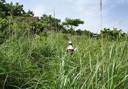 藪に覆われた大久保山