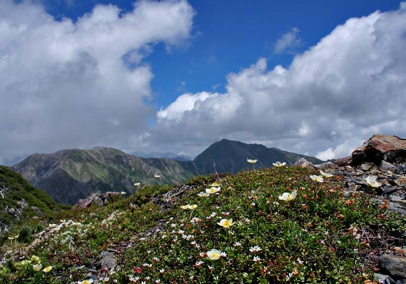 小赤石岳の肩から荒川三山を望む