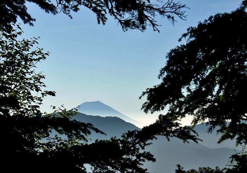 木々の間から見える富士山