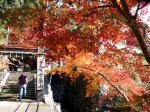 七面山の紅葉
