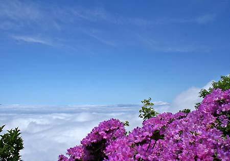 雲海とミヤマキリシマ