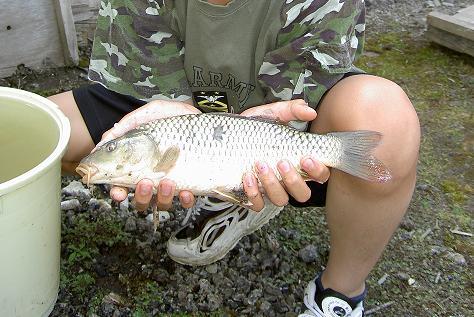 10歳の頃、コイも釣ったよな~