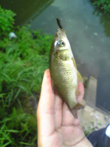 結局、釣りしちゃいました。