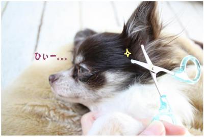 コピー (4) ~ ボーボー
