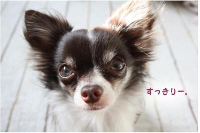 コピー (7) ~ ボーボー