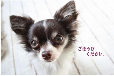 コピー (8) ~ ボーボー