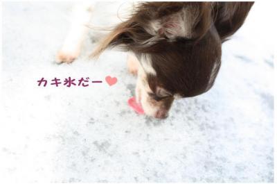 コピー (5) ~ yuki