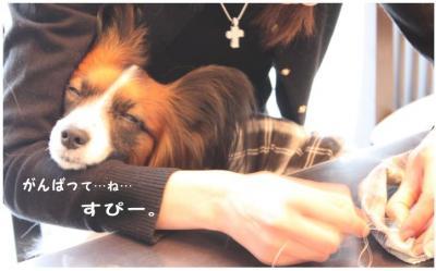 コピー (5) ~ シュシュ