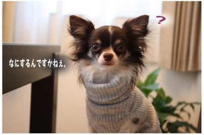 コピー (3) ~ シュシュ