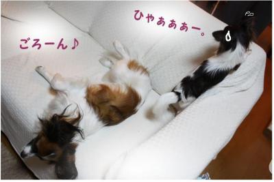 コピー (13) ~ シュシュ