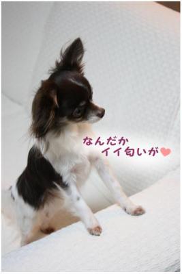コピー (4) ~ キッシュ