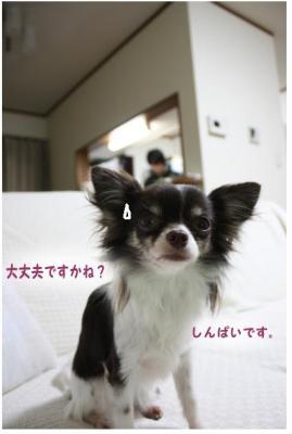 コピー ~ キッシュ