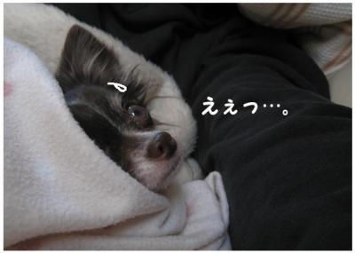 コピー (6) ~ さむピザ