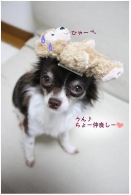 コピー (5) ~ omiya