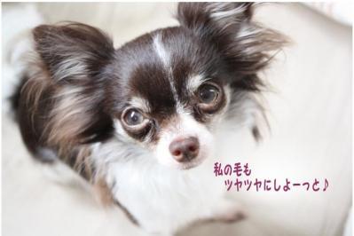 コピー (7) ~ nano