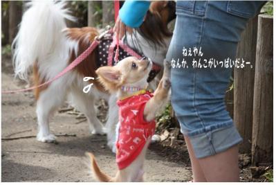 コピー (4) ~ お花見