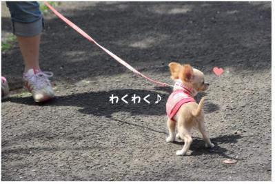 コピー (2) ~ お花見