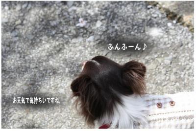 コピー (8) ~ お花見