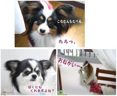 コピー (4) ~ お花見2