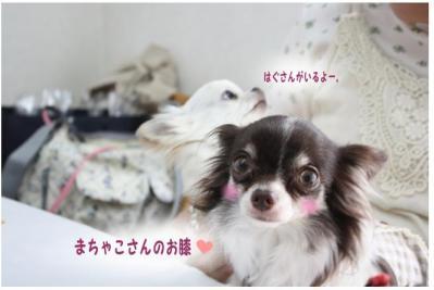 コピー (9) ~ お花見2