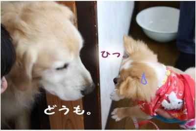 コピー (15) ~ お花見2