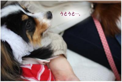 コピー (12) ~ お花見2