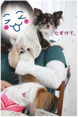コピー (11) ~ お花見2