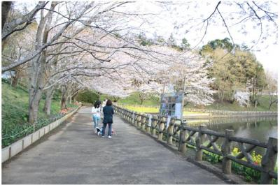 コピー (17) ~ お花見2
