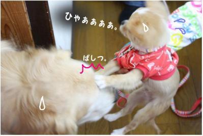 コピー (16) ~ お花見2