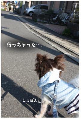 コピー (5) ~ 初登校