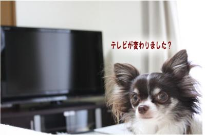 コピー (4) ~ ひかり