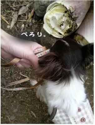 コピー (6) ~ 畑