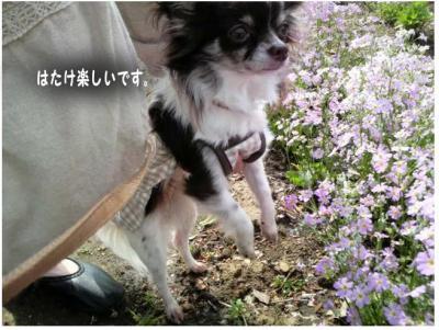 コピー (3) ~ 畑
