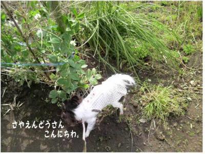 コピー (4) ~ 畑