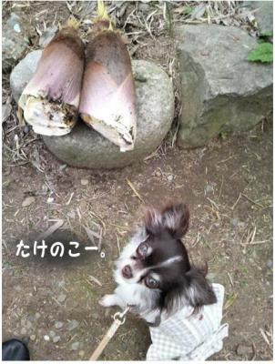 コピー (5) ~ 畑