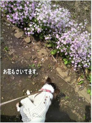 コピー (2) ~ 畑