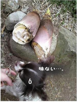 コピー (7) ~ 畑