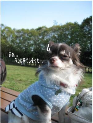 コピー (4) ~ らん