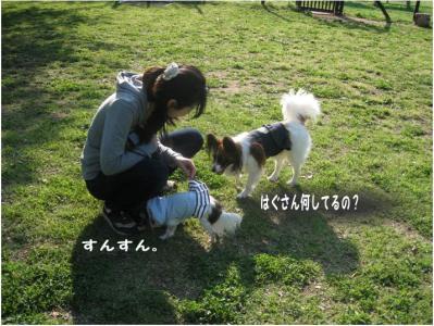 コピー (11) ~ らん