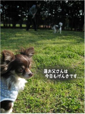 コピー (7) ~ らん