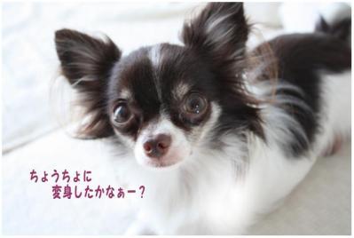 コピー (2) ~ お客